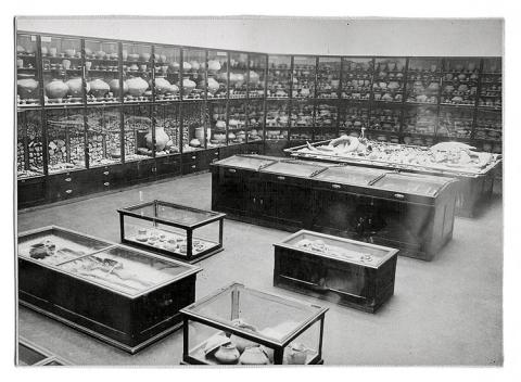 Archeologická expozice ve druhém patře nové budovy muzea
