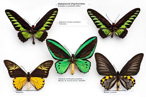 Z výstavy O motýlech a lidech